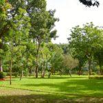 Sogoniko : un espace vert illégalement occupé par Sadio Bathily